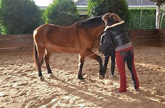 team building cheval