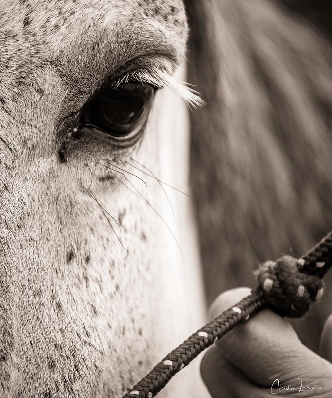 teambuiding cheval